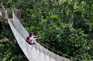 educator at the ACTS canopy walkway in Peru